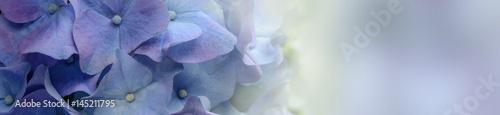 Purple Hydrangea Flower banner