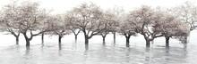 Flowering Garden Over The Water, Flowering Cherry Blossoms, Flowering Trees In The Water, 3d Rendering
