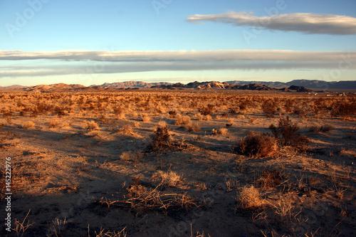 Photo Arid landscape in the Mojave desert near Twentynine Palms, California, USA