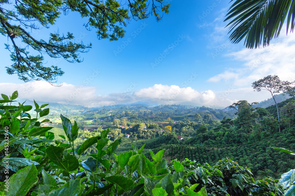 Fototapety, obrazy: Early morning View of a Coffee plantation near Manizales in the Coffee Triangle of Colombia.