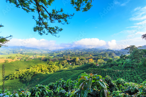 Photo  Brilliant blue sky view of a Coffee plantation near Manizales in the Coffee Triangle of Colombia