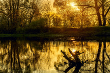 Morning On The River, Sun Through The Branches Of Trees, Leaves Covered In Golden Sunlight,  Sparkling Gleams On The Water. A Warm Photo Of A Golden Spring Morning, An Atmosphere Of Happiness.