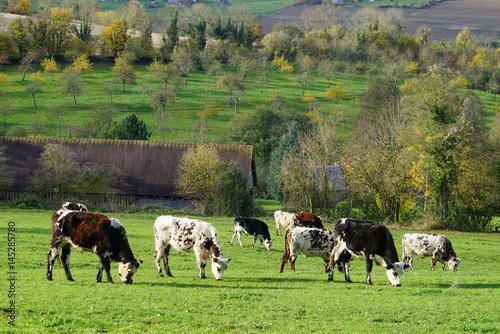 Fotografie, Obraz  Paysage Campagne 180