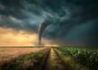 Leinwandbild Motiv Tornado struck on agricultural fields at sunset