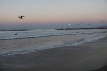 Seagulls Flying Over Venice Beach Against Sky During Sunset