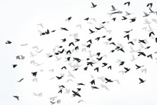 Digital Composite Image Of Silhouette Birds Flying With Shadows On White Background