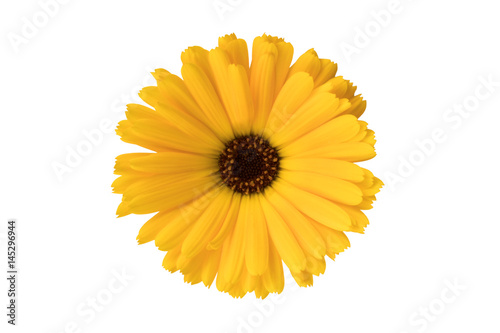 Valokuvatapetti Yellow Flower or Black Eyed Susan on White Background