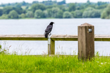 Day View Of Lonely Crow On Lake Fencing