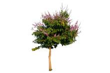 Tree Inthanin, Queen S Flower,...