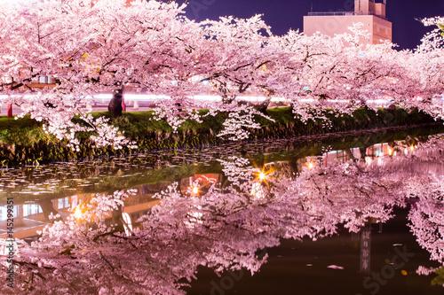 Fotografie, Obraz  弘前公園の夜桜