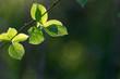 緑輝く森の葉っぱ