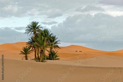 Moroccan desert, Merzouga Canvas