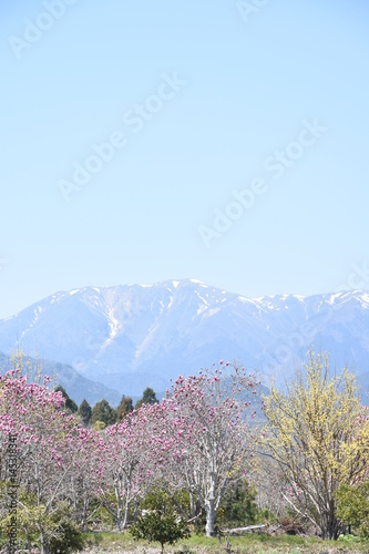 Photo  Mount Ryu, Mie, Japan