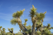 Arthur B. Ripley Desert Woodla...