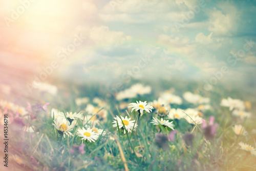 Foto op Canvas Madeliefjes Daisy flower in meadow - beautiful nature in spring
