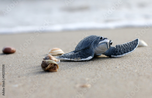 Spoed Foto op Canvas Schildpad Turtle on Beach