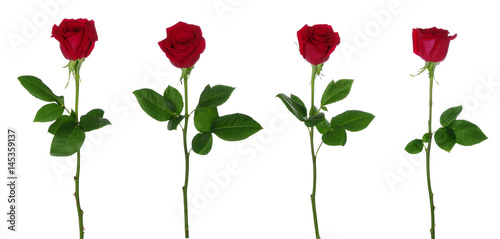 Papiers peints Roses Red rose