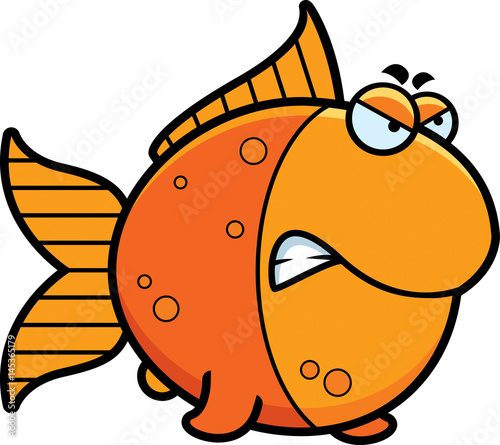 Photo  Angry Cartoon Goldfish