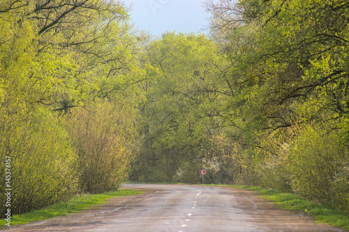 Fototapety, obrazy: Landscape of road under the trees,