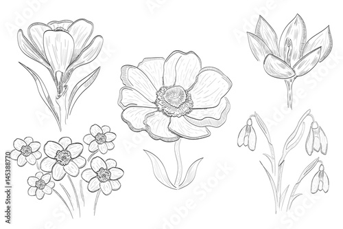 Black And White Vector Illustration Spring Flowers Buy This Stock