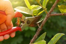 Gardener Pruning Trees With Pr...