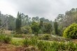 Wide view of green garden with grass, trees, plants, shadows and pathway, Ooty, India, 19 Aug 2016