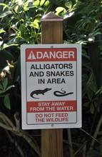Danger Alligators And Snakes I...