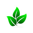 GREEN LEAF DESIGN ICON