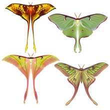 Set Of  Beautiful Luna Moth