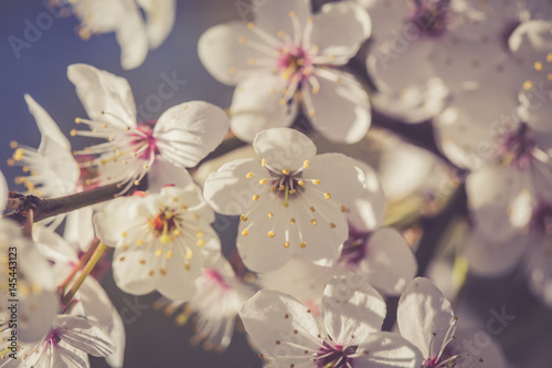 Blossom tree over nature background.