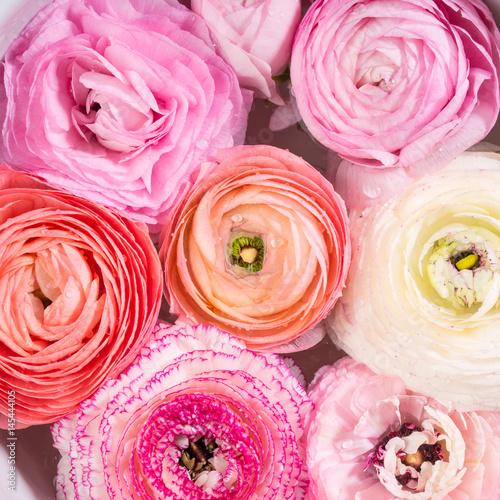 Photo Beautiful pink ranunculus spring background