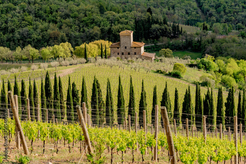 Panorama of green chianti hills in tuscany italy in spring, land of red wine and Fototapet