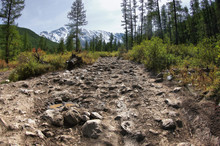 Extreme Rocky Dirt Road In A Mountain Valley Among Cedar Trees Forest On The Background Of Snowy Mountain Ranges Aktru Altai Mountains, Siberia, Russia