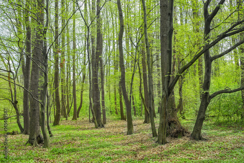 wiosenny-krajobraz-lasu-naturalny-zielony-kolor