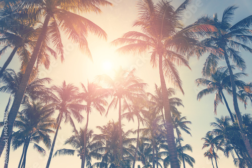 Photo  Tropical beach with palm trees and sunny sky