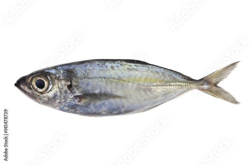 Valokuva Selar crumenophthalmus ,Bigeye scad ,fish isolated on white background