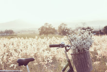 Vintage Bicycle With Basket Full Of Grass In The Field
