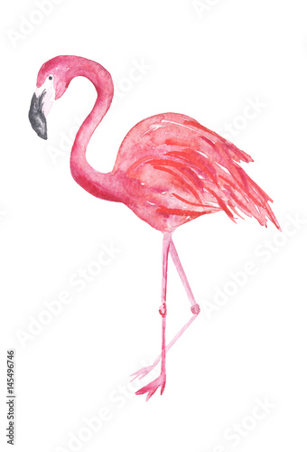 Watercolor flamingo illustration