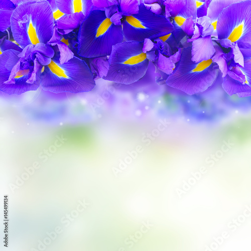 Photo Stands Floral woman Blue iris flowers border with copy space on blue bokeh background