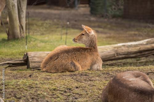 Two deers at zoo in Berlin Poster