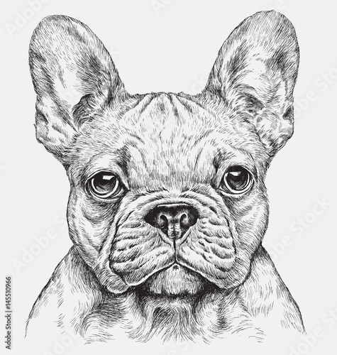 Highly detailed hand drawn French Bulldog vector illustration © Michael Hinkle
