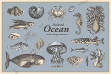 Retro Graphic Design Elements: Ocean Fauna - Collection Of Vintage Drawings Featuring Fishes, Shells And Other Mollusks A Whale, An Octopus, A Seahorse, Different Corals And More