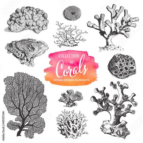 Fototapeta premium elementy projektu wektorów lato, plaża i ocean: zbiór rysunków koralowców morskich