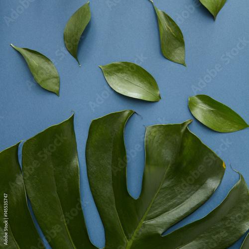 zielen-liscie-odizolowywajacy