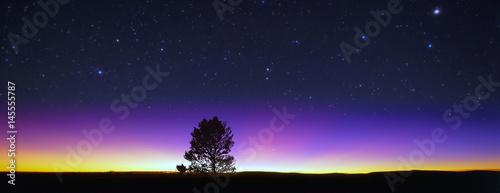 Photo  夜空と木