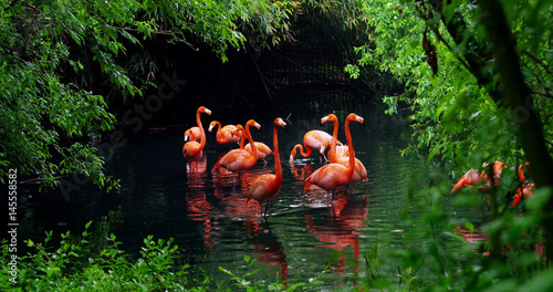 A group of pink flamingos play in the water and are in a fantastic location