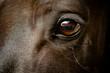 canvas print picture - Auge eines schwarzen Pferdes Nahaufnahme