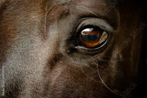 Foto auf Gartenposter Pferde Auge eines schwarzen Pferdes Nahaufnahme