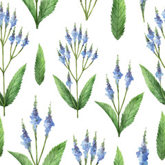 Panel Szklany Przyprawy Hand drawn watercolor seamless pattern of Blue vervain.