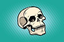 Human Skull Head Skeleton